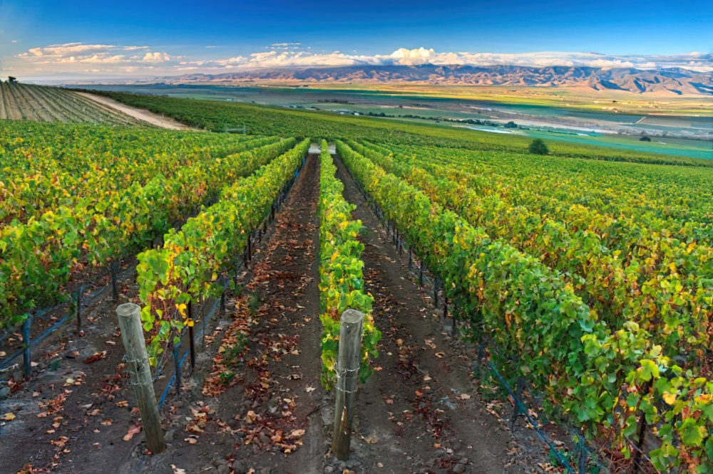Veeyard Meaning: 4 California Wineries That Give True Meaning To The Art Of