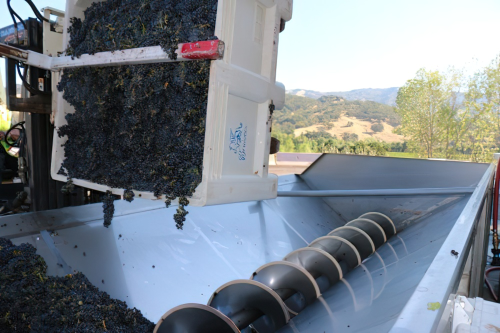 Beautiful grapes for beautiful wines at Brutocao Cellars. This small family winery has been tending & Bloom where you are with Brutocao Cellars - Uncorked: The Blog ...
