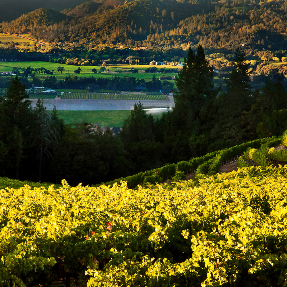 Terra Valentine Winery Estate Vineyard In The Spring Mountain District. The  Question U201cHow Long