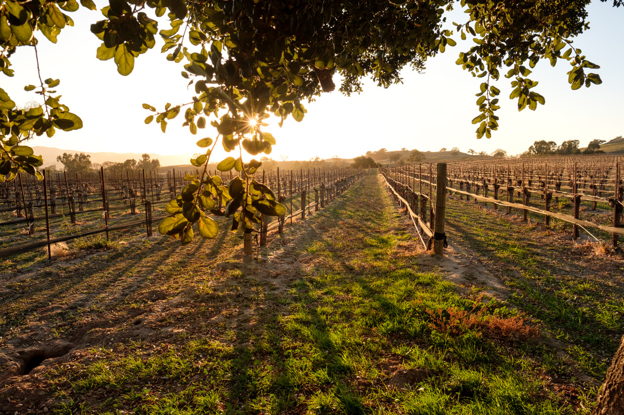Ask a Winemaker: What is Hands Off Winemaking?